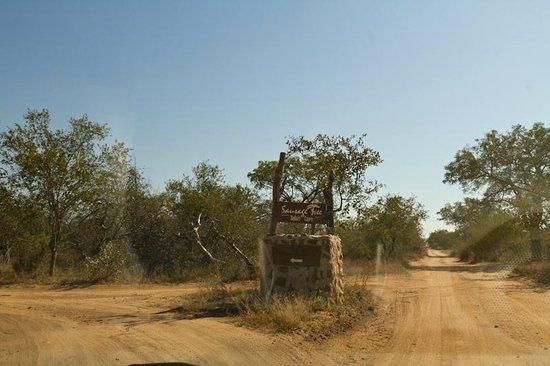 Sausage Tree Safari Camp : Sur la piste