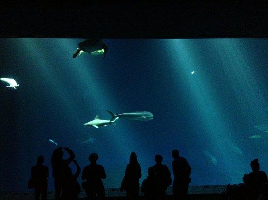 Monterey Bay Aquarium Cafe Restaurant Reviews Photos