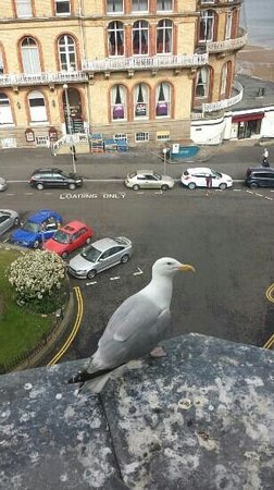 Travelodge Scarborough St Nicholas Hotel: comes with own pet seagull. adorable!