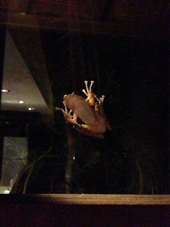 Gending Kedis Villas & Spa Estate: froggy outside our window