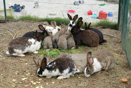 De Heurwinning : our rabbits