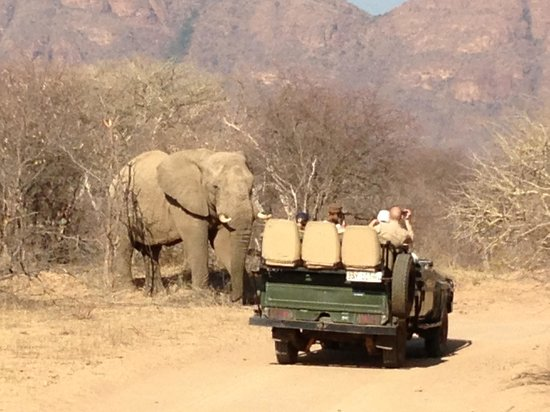 Marataba Safari Lodge: On the game drive