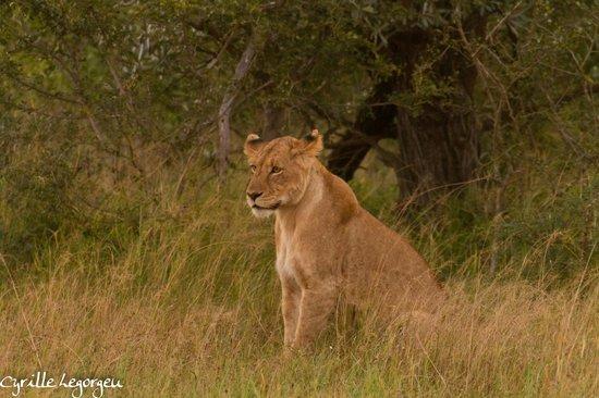 Sausage Tree Safari Camp : A l'affut à la tombée du jour