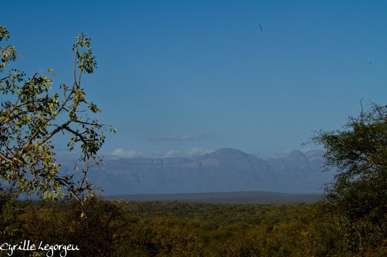 Sausage Tree Safari Camp : Le paysage dans Balule Reserve