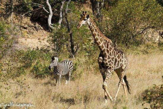 Sausage Tree Safari Camp : Vue depuis la terrasse de la tente