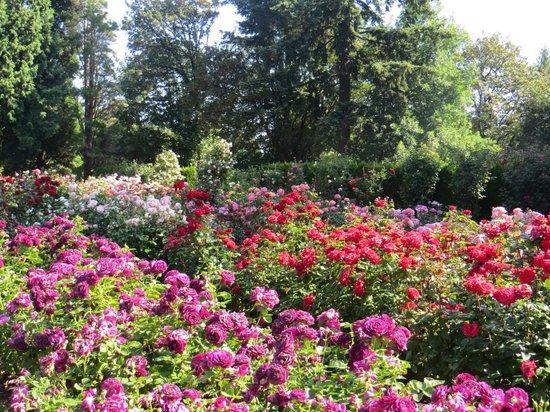 Washington  Park : Rose Garden