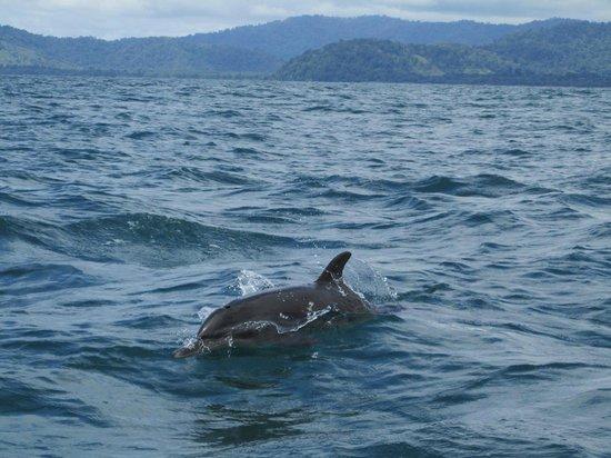 Casa Corcovado Jungle Lodge: dolphins