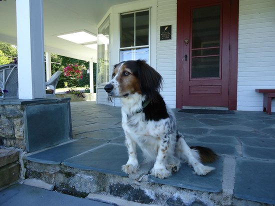 Sugar Hill Inn: Katie the dog