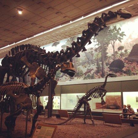 Yale Peabody Museum of Natural History: Dinosaur