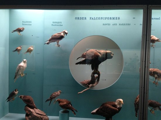 Yale Peabody Museum of Natural History: Birds