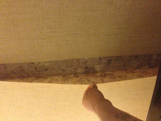 Comfort Inn Edison: Mold on the walls and wall paper!