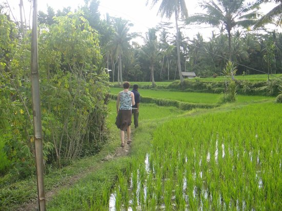 Villa Agung Khalia : Stunning ricefields just outside the villa