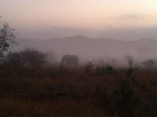 Kruger Flexi Tours - Day Tours: Elephant in the mist