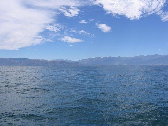Whale Watch : The beautiful Kaikoura Range.