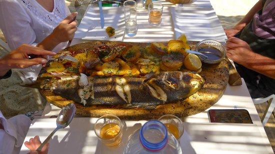 Chez Jo: Pêche du jour
