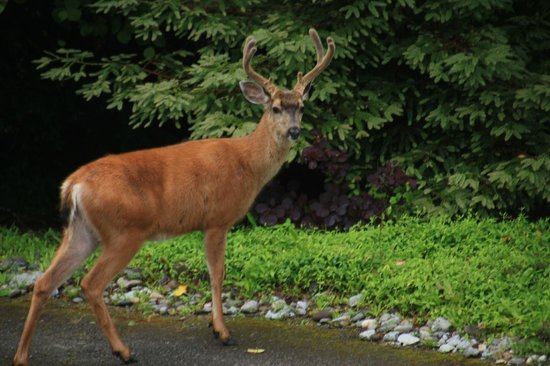 A View With A Room : Deer in the Yard