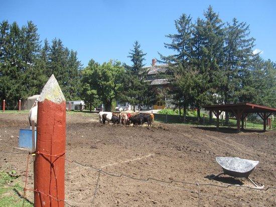 Canada Agriculture and Food Museum: Enclos extérieur pour les vaches