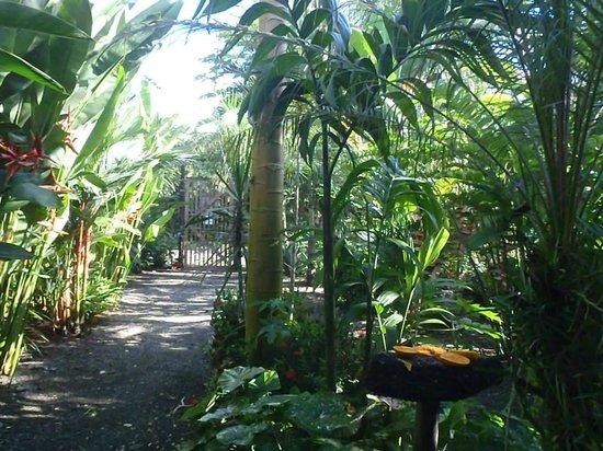 Cabinas Tropicales: papaya for toucans and macaws