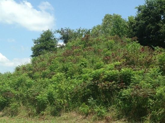 Spiro, Oklahoma: Craig mound