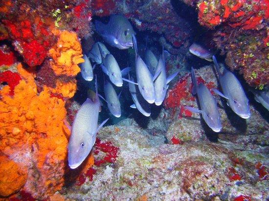 Blue Angel Dive Shop: Hello, hello, hello, hello....