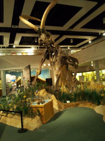 Utah State University Eastern Prehistoric Museum : Huntington Mammoth Exhibit