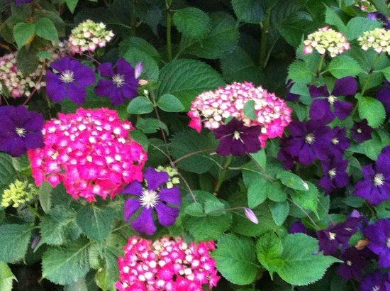 Farmhouse Bed & Breakfast : Beautiful flowers in their gardens