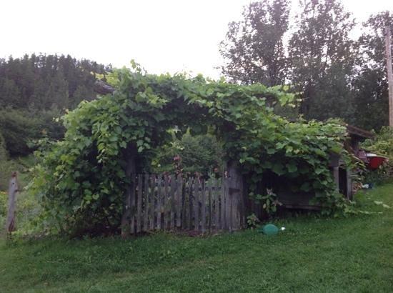 Aux Bons Jardins : le jardin