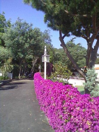 Poggio Aragosta Hotel & Spa: viale di ingresso