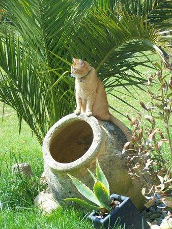 Le Clos de Canaplaye : Tit Roux le chat de la maison