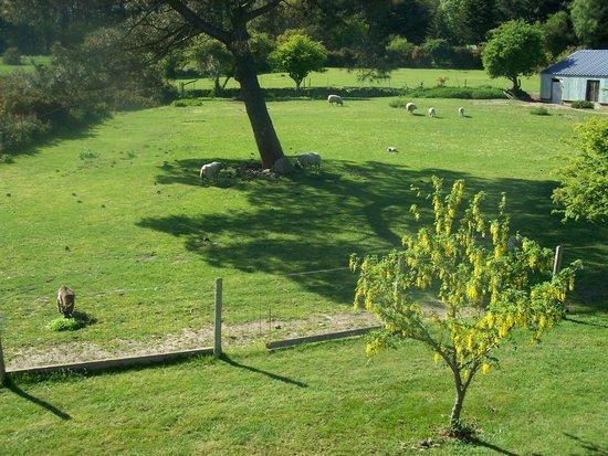Le Clos de Canaplaye : Vue de la chambre La Chèvre