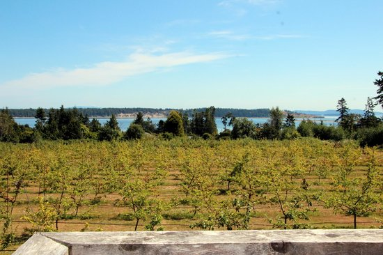 Sea Cider Farm & Ciderhouse: Views from the deck