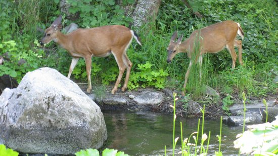 Ashland Creek Inn : Every morning at breakfast (of 3 times), our visitors