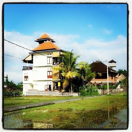 Three Dewi's Guest House : three dewis guest house ubud