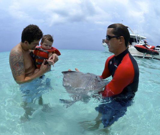 Cayman Private Charters: Grandson meeting his first stingray