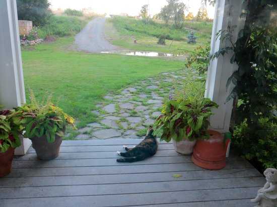 Whiting Bay Bed and Breakfast: Mitty enjoying the evening