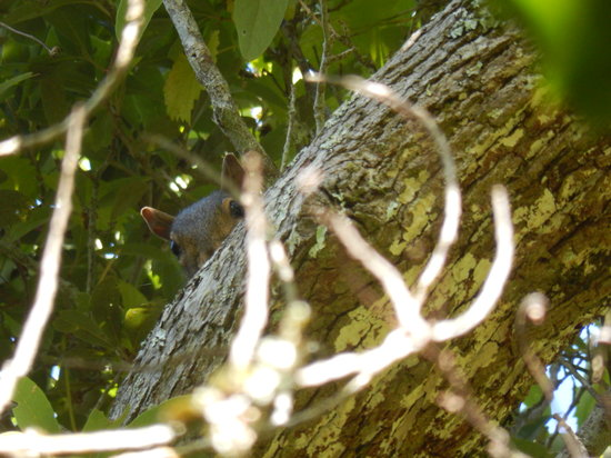 Theodore Roosevelt Natural Area: Squirrel checking me out