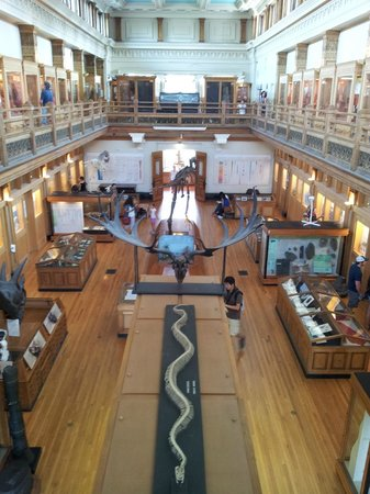 Musee Redpath: Great Hall within the Redpath Museum.
