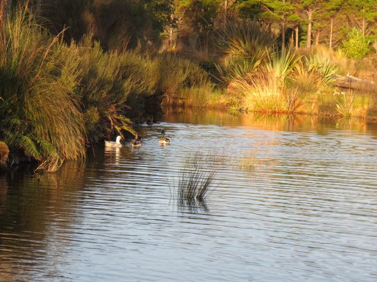 Birds Ferry Lodge: Duck pond next to cottage