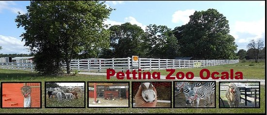 ‪Petting Zoo Ocala‬