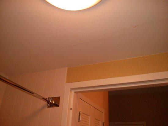Courtyard Greenbelt : Bathroom ceiling