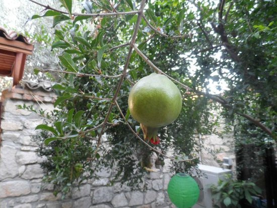 Ephesus Suites Hotel: Pomegranate tree in court yard where breakfast is served