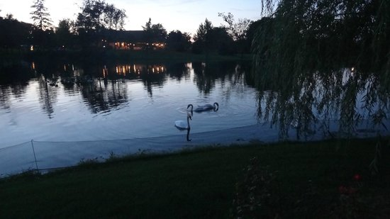 The Villas at Gervasi Vineyard: Lake at night