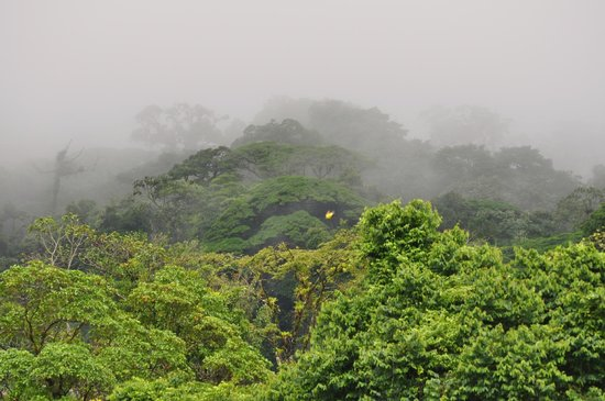 Hotel Lomas del Volcan: Low clouds over the forest at foot of Volcano
