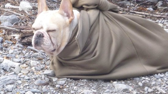 Mary Jane Falls Trail: Pig in a blanket. Big Schmin catchin a nap.