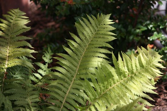 Fertile Ground Guesthouse: Ferns abound