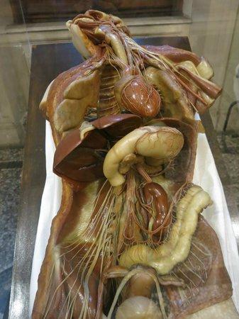 The visible human 1: fotografía de Museo di Anatomia Umana, Turín ...