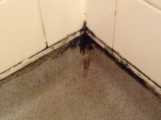 LSE Bankside House: Moldy shower