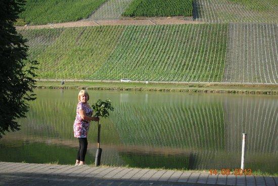 Moselhotel Leyendecker: Vine yards across the river