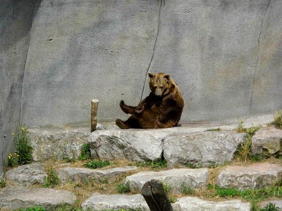 Parc Zoologique de Fort Mardyck: le premier ours