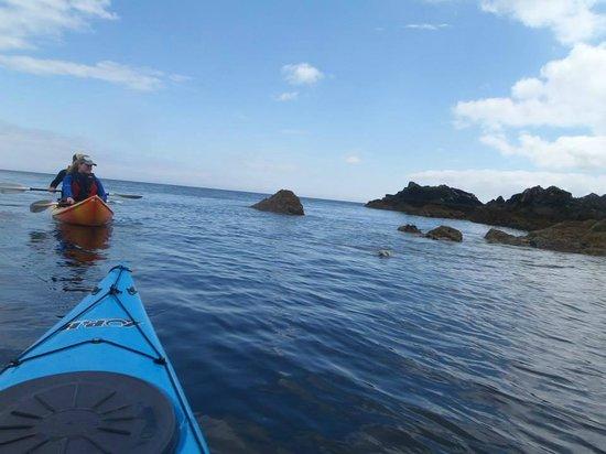 Cornwall Kayaking: Spotting sammy the seal
